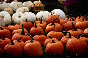 Pumpkin Patches on Halloween